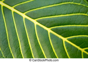 Big green plant leaf macro