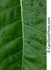 Big green plant leaf macro