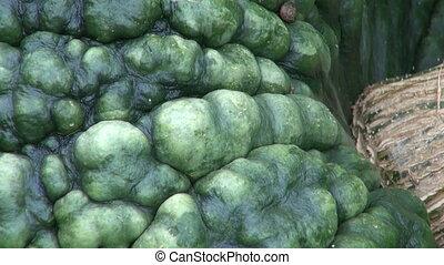 big green pumpkins vegetable  grow
