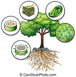 Big green tree and close plant cells illustration