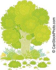 Big green tree on a pretty forest glade - Branchy oak, ...