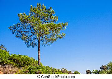 Big green tree on background blue sky