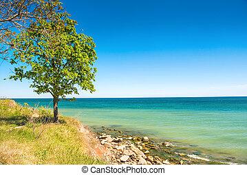 Big green tree on the beach