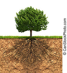 Big green tree with roots beneath - Big green tree with...