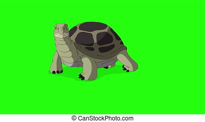 Big green turtle turtle buries itself in the sand. Handmade animated footage isolated on green screen