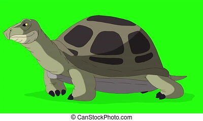 Big green turtle sniffing. Handmade animated looped footage isolated on green screen