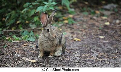 Big Grey Rabbit sniffs