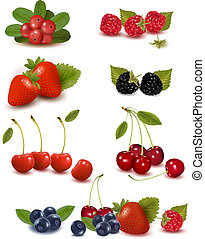 Big group of fresh berries  Vector illustration