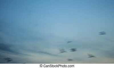 Big group of many black crow birds flying over blue sunset sky.
