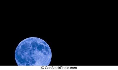 Big Halloween Moon Rising In the Black Sky - Beautiful big...