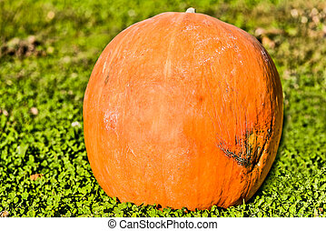 Big Halloween pumpkin