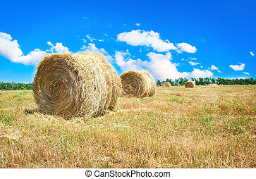 Big hay bale field in late summer