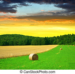 Big hay bale rolls