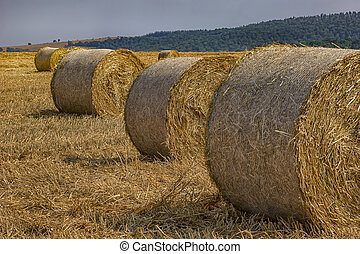 Big hay bales on the field after harvest