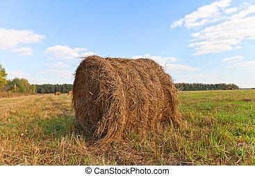 Big hay roll on mowed field