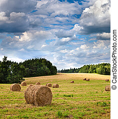Big hay rolls on a beautiful field