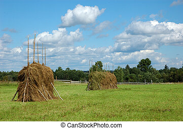 Big haystacks on the meadow