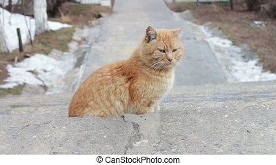 Big homeless cat on street