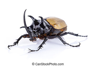 Big horned beetle on white background