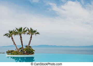 Big Infinity Luxury Swimming Pool with tropical palms.
