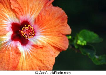 Big Island Bloom