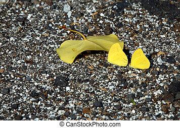 Big Island Butterflies