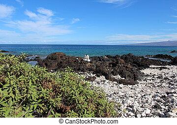 Big Island Hawaii Coast