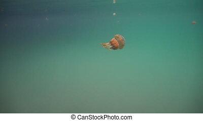 Big jellyfish in the water. Bucas Grande Island, Sohoton...