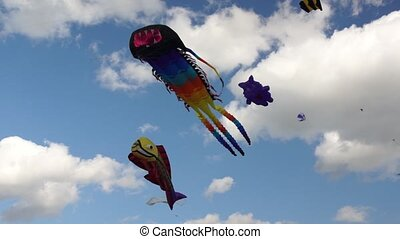 Big kites in a sky