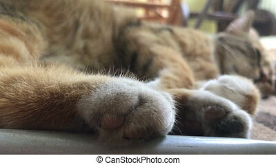 big Kitty with soft paws sleeps on the street