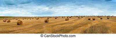 Big landscape of hay bales on the field after harvest