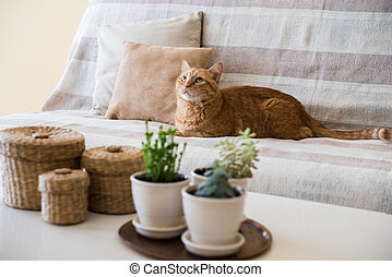 lazy ginger cat laying on a sofa