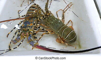 Big lobster in a stall at seafood market in Thailand. Hand...