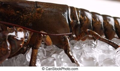 Big lobster moving his mouth. Live lobster laying on ice....