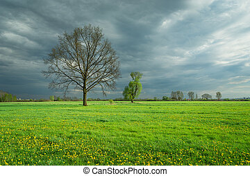 Big oak in a green meadow, rainy clouds on the sky