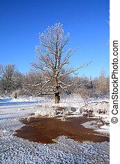 big oak near red water