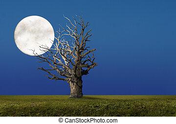 Big oak tree at night with big moon
