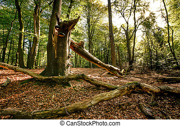 Big old broken tree trunk in the autumn forest