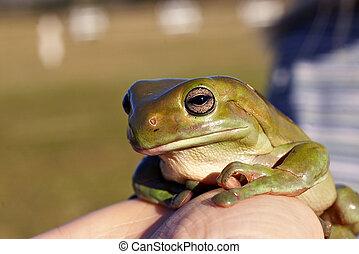 big old frog