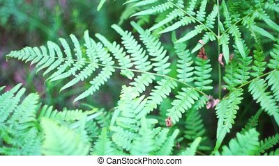 Big old lush fern growing in overgrown lush wild jungle. -...