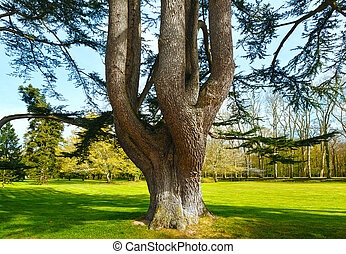 Big old tree in spring park.
