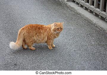 big orange cat walks in the middle of the asphalt road with arrogance