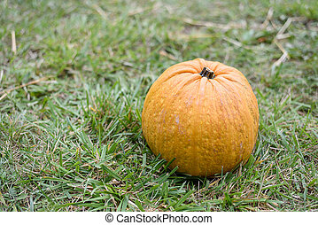 Big orange pumpkin on green grass