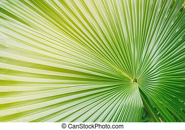 Big palm leaf in color layers