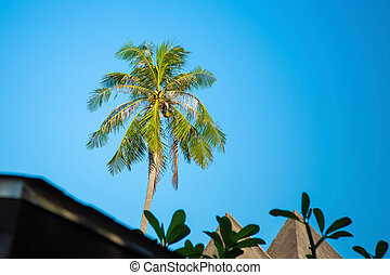Big palm tree with coconuts on a background of blue sky