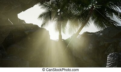 Big Palms in Stone Cave with Rays of Sunlight