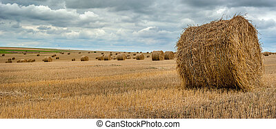 panorama of hay bales on the field after harvest