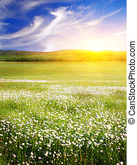 big, peloton k květovat, dále, sunrise., komponování, o, nature.