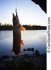 big pike turbulent water fishing