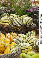 Big pile of green striped pumpkins at a farmers market, vegetables autumn harvest festival